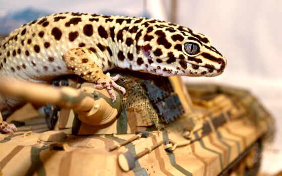 gecko, эублефар, глаз, танк, ящер