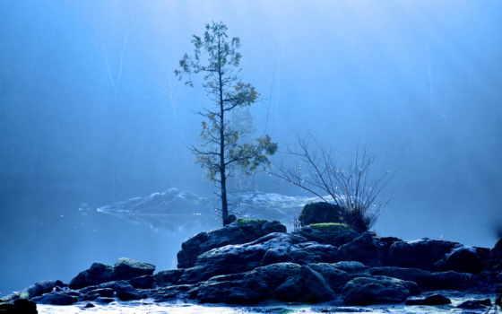 дерево, природа