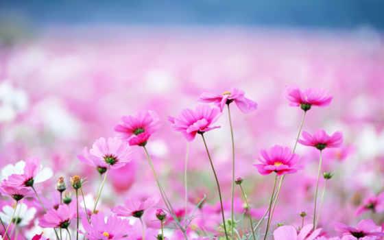 cvety, полевые, комментарии