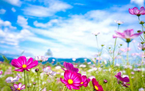 природа, summer, цветы,