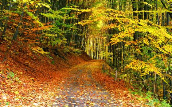 осень, лес, тропинка