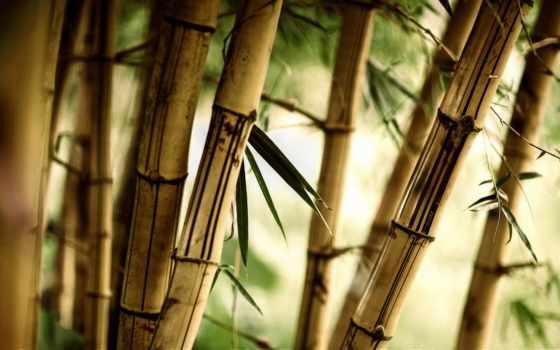 бамбук, листва, фотообои, природа, краски,
