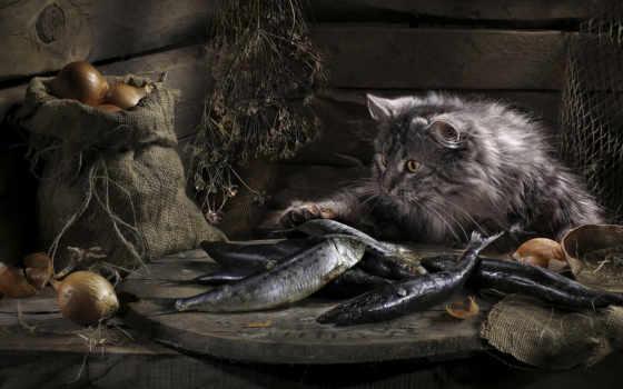 кот, fish, luck, кошки,