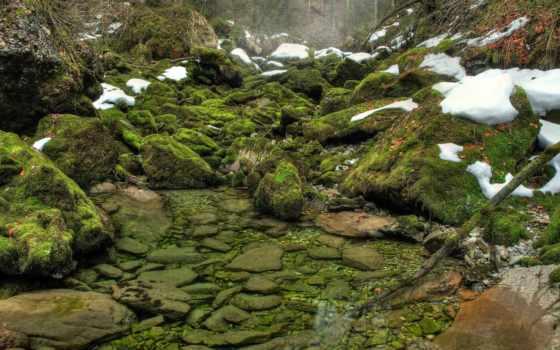мох, камни, природа, лес, весна, зелёный, desktop, water, река,