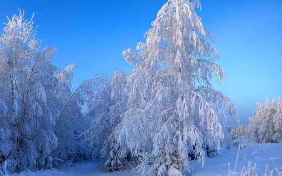 trees, природа, зимние, снег, года, природы, you, winter, time, аллея,