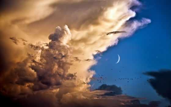 птицы, небо