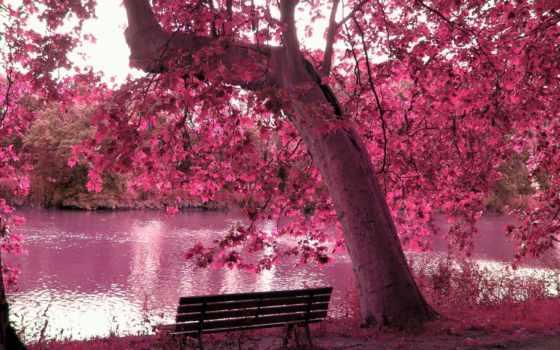 пруд, дерево