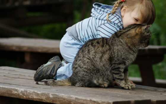 девушка, ребенок, картинка, baby, кот, косичка,