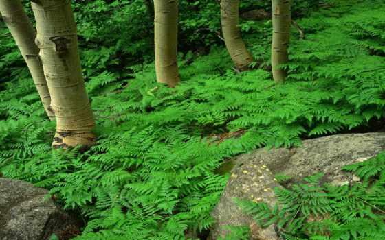 папоротник, лес, зелёный