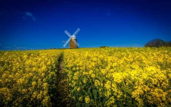 ветряк, landscape, поле, flowers, buildings, облако, цветы, природа,