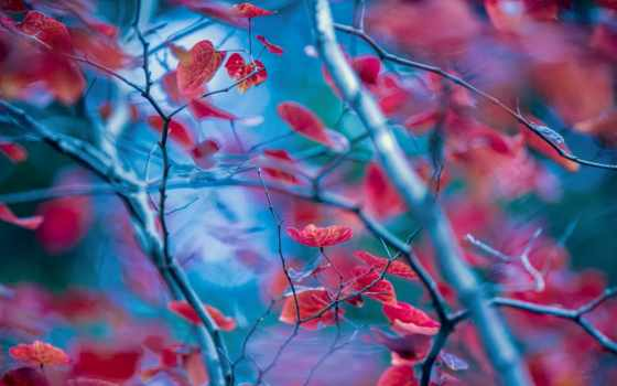 тематику, макро, листва, различную, красивых, фотографий, зарядимся,