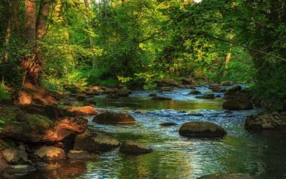 природа, река, pictures, photos, изображение, заводь, les, desktop,