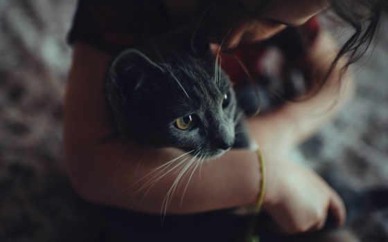 девушка, кот, смотреть, she, браслет, кошки, filters, руках,