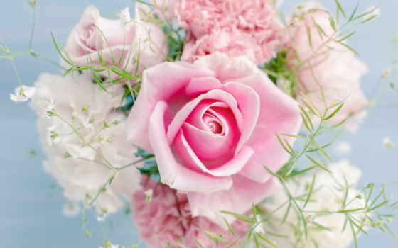 роза, flowers, розовый, cvety, букет, свет, color, розовая,