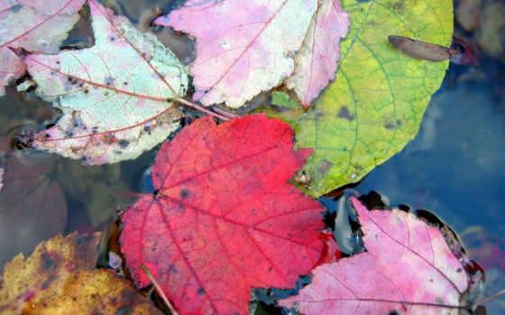 fondos, pantalla, otoño, hojas, imágenes, escritorio, colorido, fondo, agua,