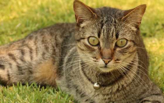 free, кот, млекопитающее, stock, photos, resolutions, animal,