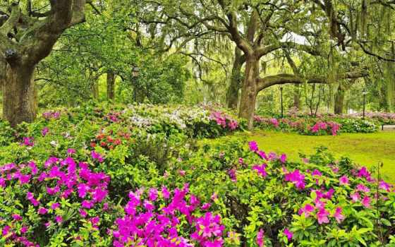 garden, цветы, коллекция