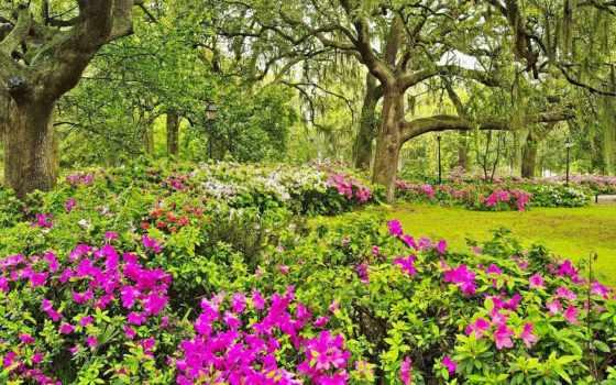 garden, цветы, коллекция, cvety, цвета