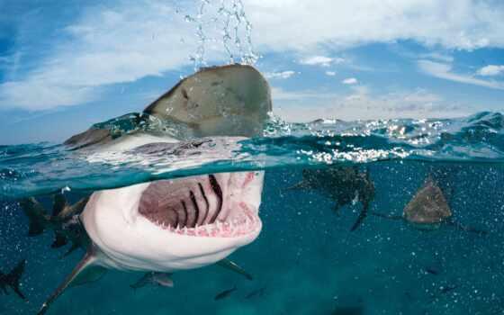 миро, underwater, shirokoformatnyi, акула, fish, ocean, diving