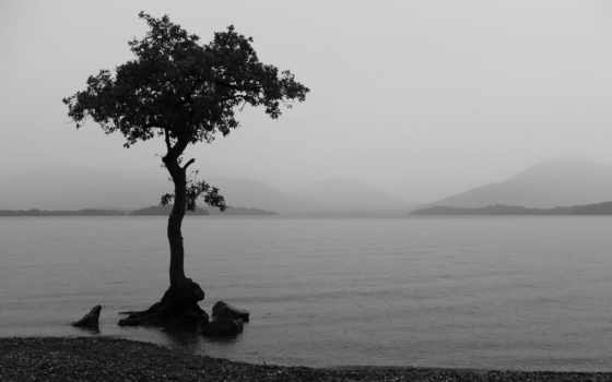 wallpaper, and, tree, black, white, wallpapers, water, desktop, waterscapes, similar, lighting, download, resolution, mobile, beach, with, hd, jul, landscape, trees, les, дерево, full, image,