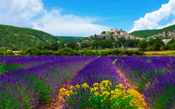 lavender, поле, поля, франция, прованс, лавандовые,