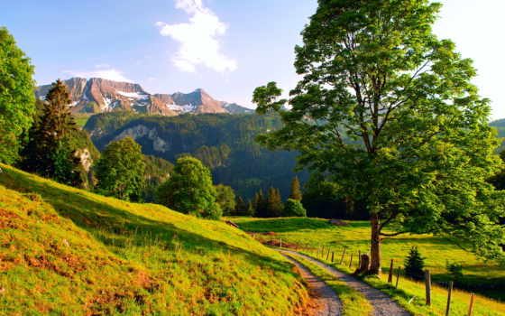 landscape, деревя, дорога