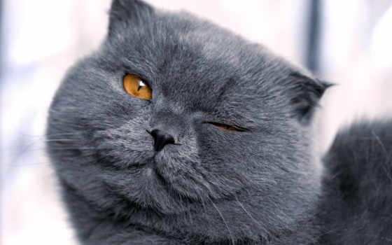 коты, брутальные, июнь