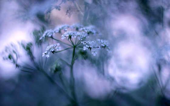 desktop, растение, красивые, pictures, flowers, природа, фон, just, нежные, душі,