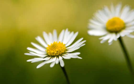 цветы, cvety, макро, природа, flowers, растения, images, free,
