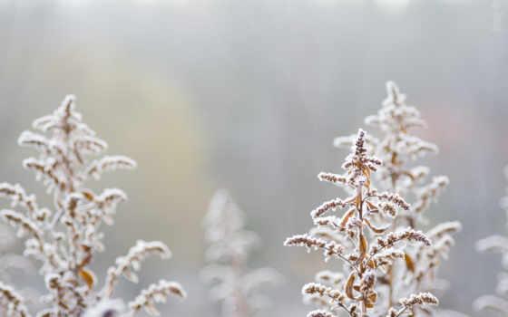 дерево, christmas, песнь,