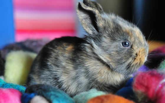 ушастый, заяц, самых, кролик,