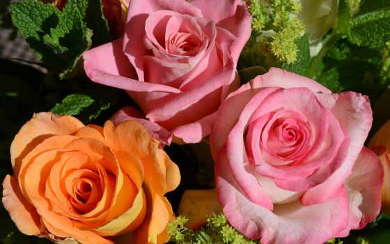 Цветы 25464