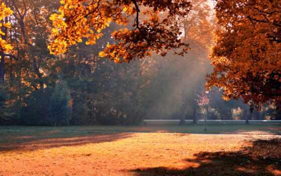 autumn, sunshine