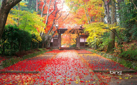 японии, церемония, чайная