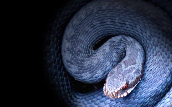 snake, лань, bush