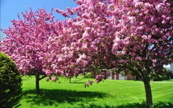 весна, цветы, цветение, природа, цветущие, trees, весенние, небо, страница, красавица, garden,
