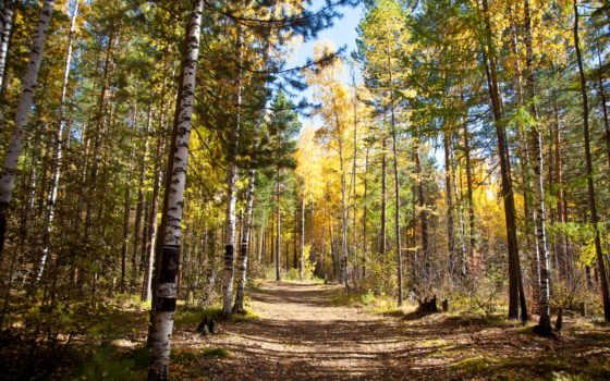tapety, pulpit, darmowe, las, pobra, jesień, дрога, krajobraz,