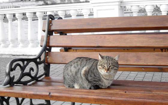 скамейка, кот, море, sit, striped,