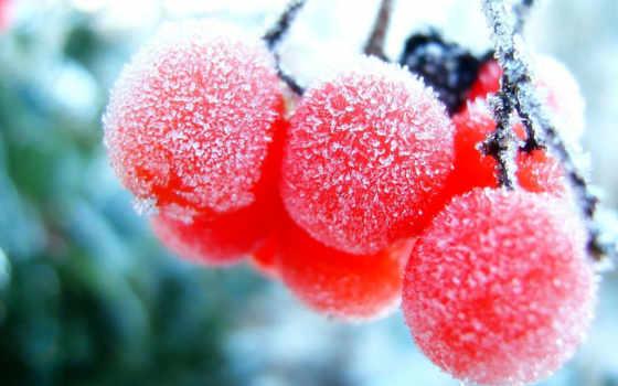 ягоды, замороженные, зимние, фотографий, природа, интересные,