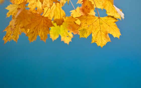 день, thanksgiving, утро, images, хороший, have,