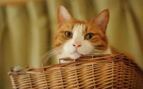 кот, cats, mobile, hvga, high, definition, wide, кошки,