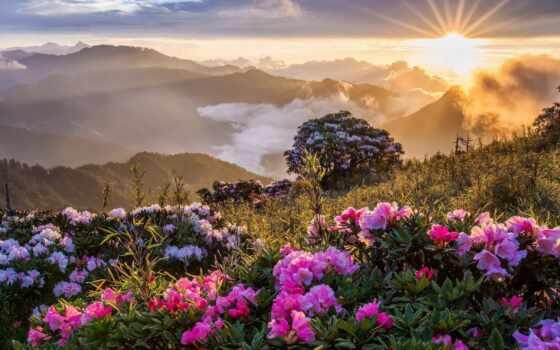 cvety, рассвет, красивый, природа, фото, закат, sun, картинка, гора