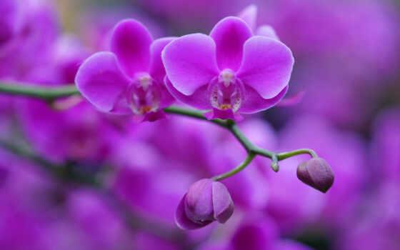 orquídea, лан, hoa, morada, орхидея, trứng, pantalla, hương, цвета, flore, phòng