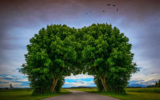 дерево, туннель, дорога