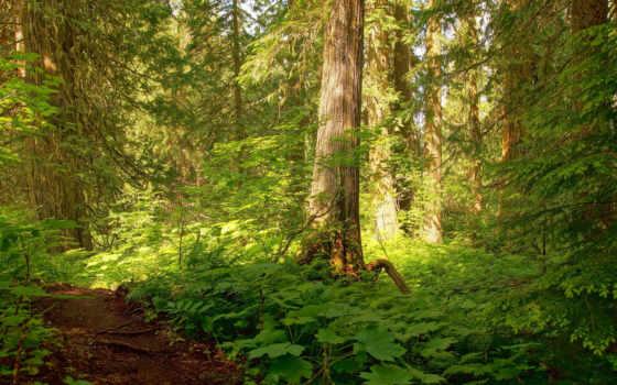 фотопанно, высоком, отличном, качестве, природа, разрешений, деревя, лес,
