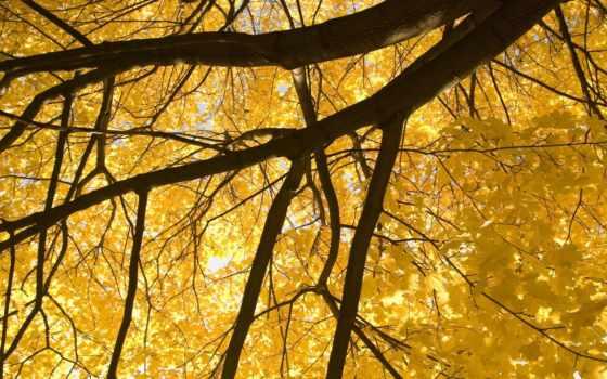 природа, ветки, осень, дерево, листва, листья, ветви,