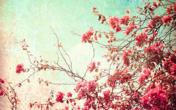 весеннее, утро, настроение, красивые, shaxriyor, lebron, shujoat, inomjon, spent, time, весна,