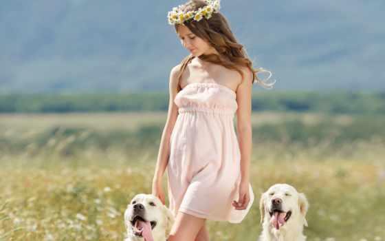 retriever, золотистый, stock, собака, photos, девушка, her, free,