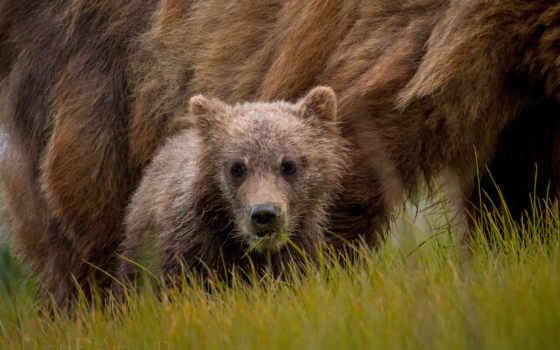 zhivotnye, нарисованные, медведь, собаки, енот, детей,