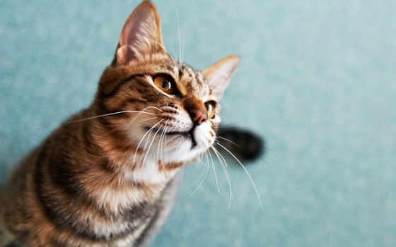 кошка со взглядом